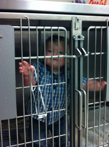 No, I did not keep my children in the cage during surgery but I was tempted!